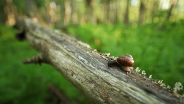 curious snail - 1969 stock videos & royalty-free footage
