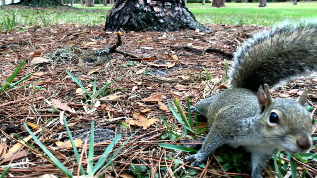 curious squirrel 4/4 - squirrel stock videos and b-roll footage