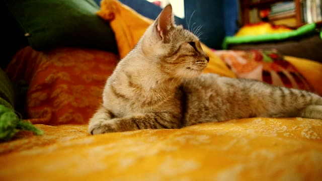 curious yellow cat lying in bed - blanket background stock videos & royalty-free footage