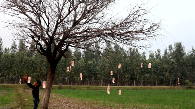 sedel på kala träd - bare tree bildbanksvideor och videomaterial från bakom kulisserna
