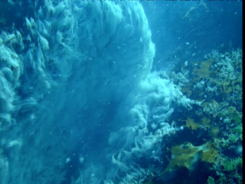 currents stream past archaea colonies growing in hydrothermal vent, new zealand - seabed stock videos & royalty-free footage