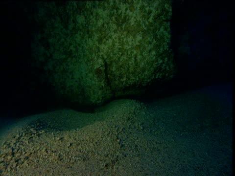 currents wash coral fragments over sea bed, cocos island, costa rica - 動物の骨点の映像素材/bロール