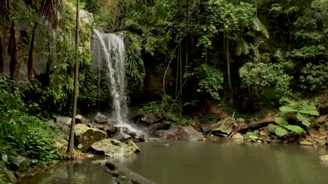 curtis falls - tropical rainforest waterfall australia - 4k video - national park stock videos & royalty-free footage