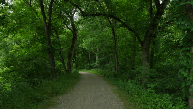 Curved Walking Path Through Green Trees Zoom In 4k