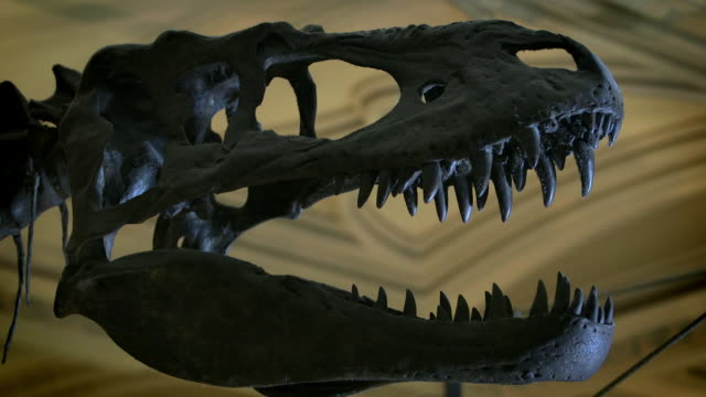cus dinosaur skeleton - fade in video transition stock videos & royalty-free footage