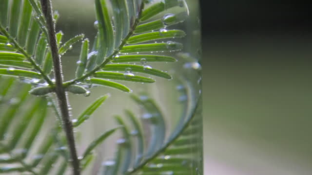 cus experiment showing photosynthesis - 18th century stock videos & royalty-free footage