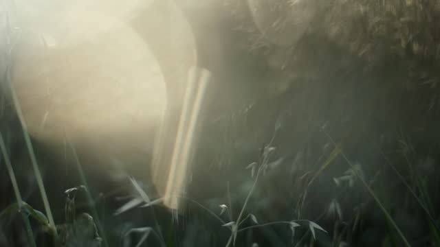 cus grassy meadow, turkey - soft focus stock videos & royalty-free footage