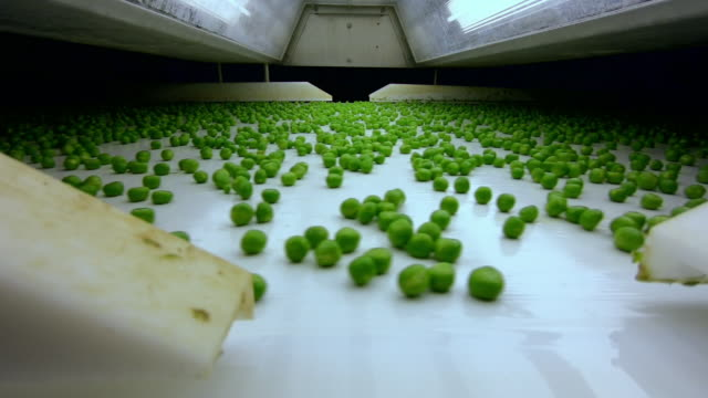 cus green peas on factory production line - conveyor belt stock videos & royalty-free footage