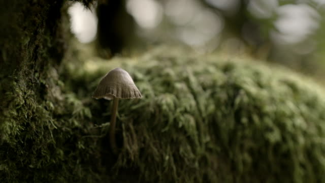 vídeos de stock, filmes e b-roll de cus in a mossy forest - imagem a cores