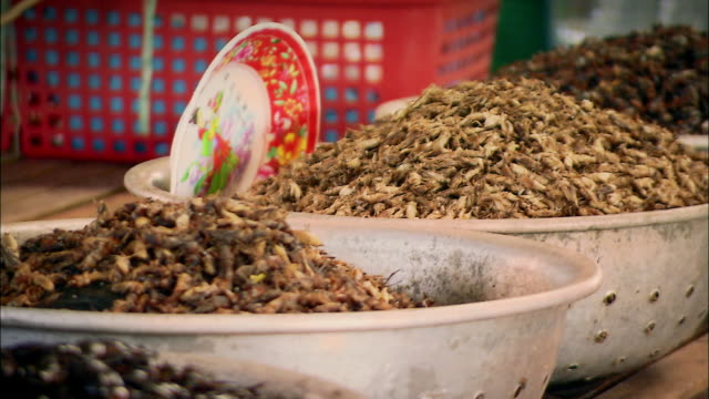 cus insects for sale at food market, thailand - grillo insetto video stock e b–roll
