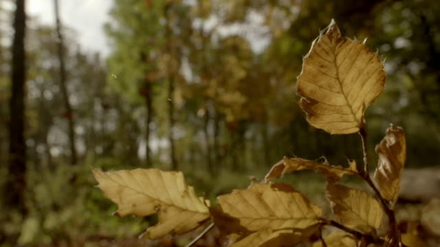 cus leaves in different seasons in woodland - focus on foreground stock videos & royalty-free footage