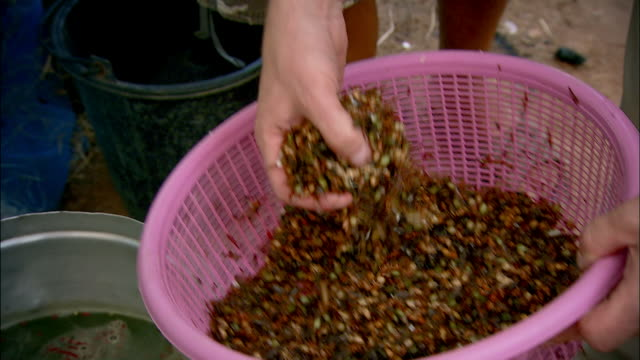 cus making red ant curry, cambodia - cibi e bevande video stock e b–roll