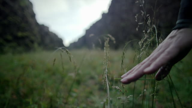 cus man walking through grass, þingvellir rift valley - steep stock videos & royalty-free footage