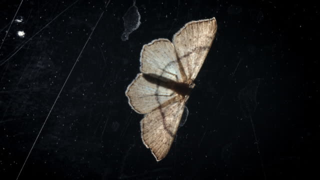 cus of moths in natural settings and with candlelight - log stock videos & royalty-free footage