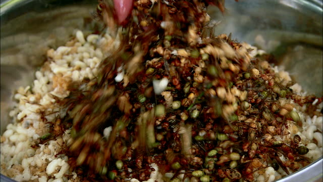 cus red ant salad, cambodia - cibi e bevande video stock e b–roll