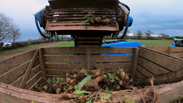 cus swede being harvested, uk - tractor stock videos & royalty-free footage
