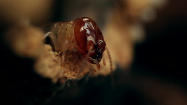 cus termites, south africa - three animals stock videos & royalty-free footage