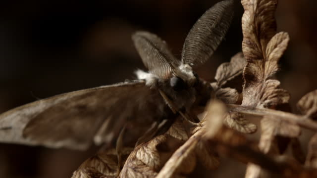 cus various moths and moth behaviours - limb body part stock videos & royalty-free footage