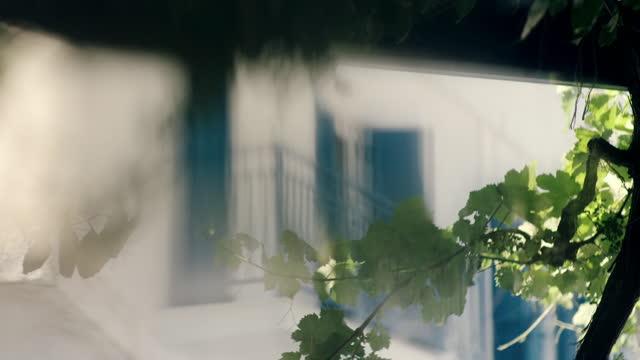 cus vine leaves growing on a veranda, greece - balcone video stock e b–roll