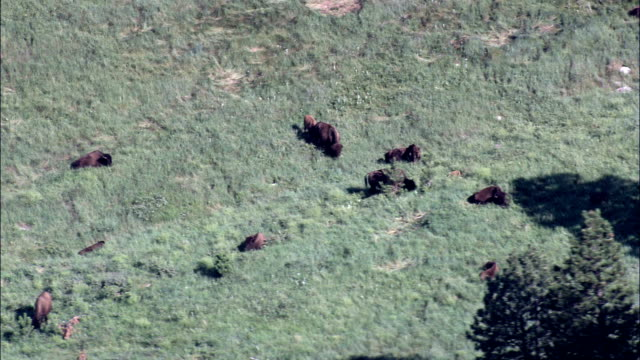 custer state park - aerial view - south dakota, custer county, united states - custer state park stock videos & royalty-free footage