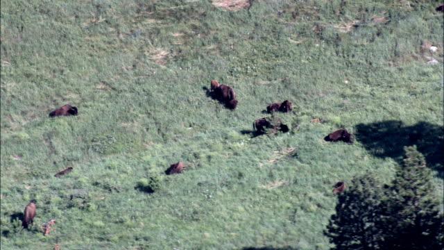 stockvideo's en b-roll-footage met custer state park - luchtfoto - south dakota, en valt bestuurlijk custer county - custer state park