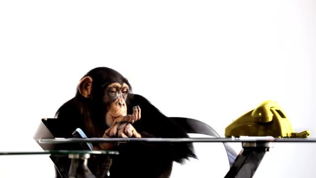 customer service monkey - waiting stock videos & royalty-free footage