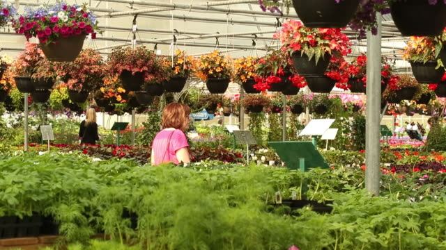 customers at lacoste garden centre winnipeg manitoba canada on thursday may 30 2019 - plant attribute stock videos and b-roll footage