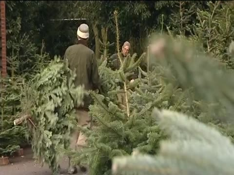 Customers laugh as they happily select Christmas trees at a tree farm