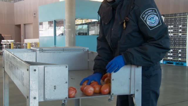 / customs agent inspects tomatoes entering the US at Otay Mesa Port of Entry
