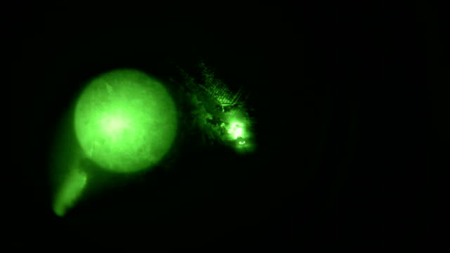a us customs and border protection helicopter crew searches for undocumented immigrants while flying a night patrol with nightvision goggles over the... - flying goggles stock videos and b-roll footage