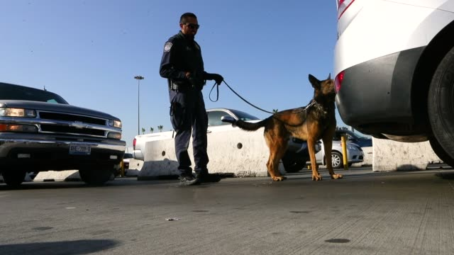 a customs and border protection officer with canine searches vehicles entering the united states at the san ysidro port of entry on april 9 2018 in... - zoll und einwanderungskontrolle stock-videos und b-roll-filmmaterial