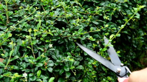 cut branches - pruning stock videos & royalty-free footage