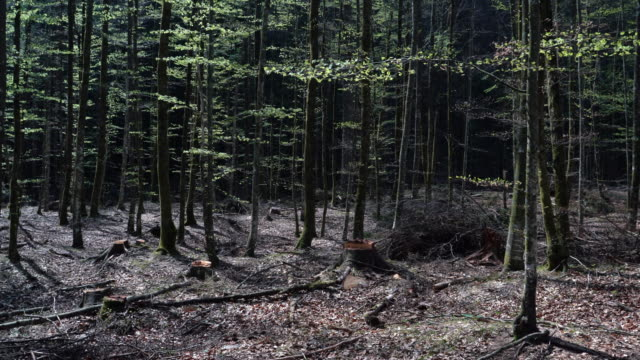 Cut Down Trees in Forest Off the Beaten Path