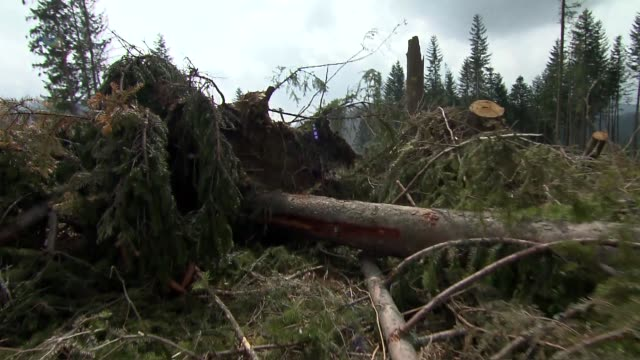 cut down trees - 小枝点の映像素材/bロール