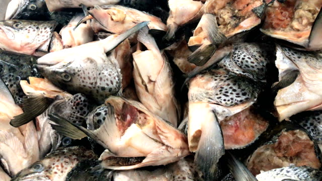 Cut salmon head in supermarket, 4K.