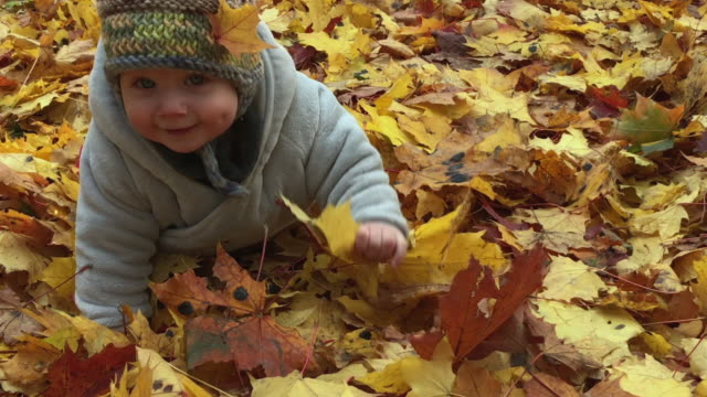 cute baby boy crawling in public park in autumn - one baby boy only stock videos & royalty-free footage