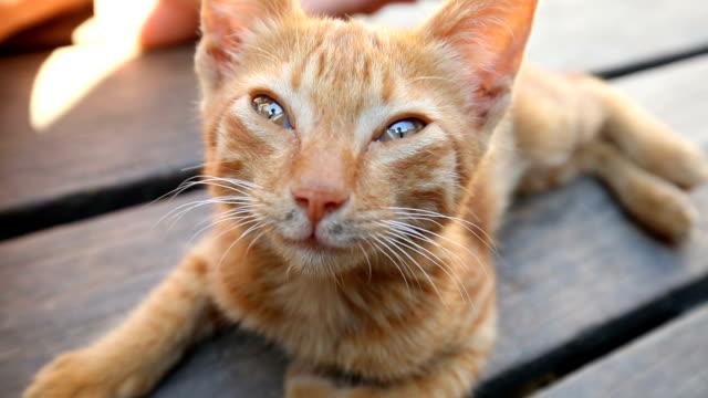 Cute baby cat caress