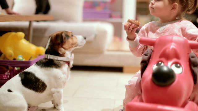 vídeos de stock e filmes b-roll de cute baby girl eating cupcake in front of her jack russell dog - alimentar