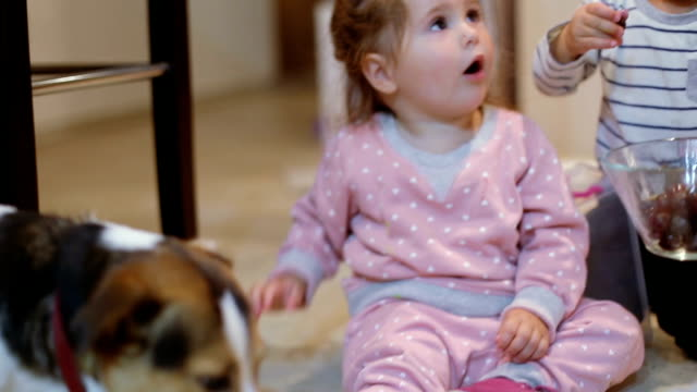 cute baby girl feeding her dog jack russell with - grape stock videos & royalty-free footage