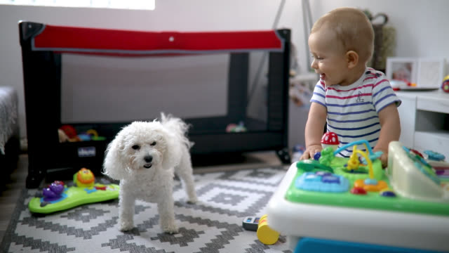 cute baby playing with toys - baby boys stock videos & royalty-free footage