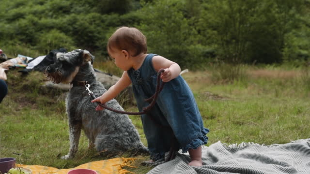 cute baby tries to walk cute dog - rebellion stock-videos und b-roll-filmmaterial