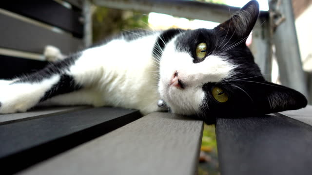 cute black and white cat on swing - collar stock videos and b-roll footage