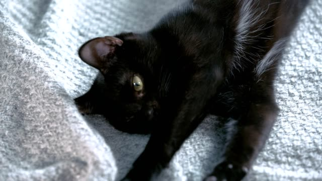 cute black cat playing with fluffy toy - kitten stock videos & royalty-free footage