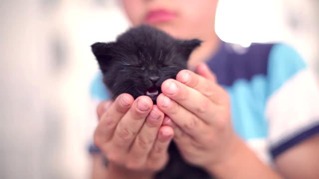 かわいい子猫ブラック - 黒猫点の映像素材/bロール