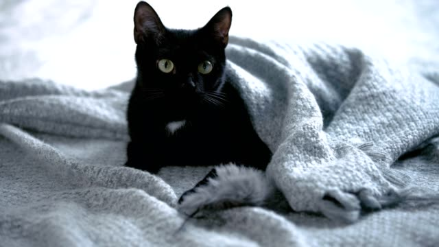 cute, black kitty lying on bed wrapped in blanket - blanket texture stock videos and b-roll footage