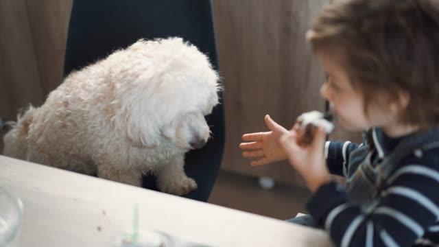 vídeos de stock, filmes e b-roll de menino bonito que compartilha de seu bolinho com seu animal de estimação - meninos
