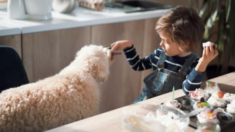 vídeos y material grabado en eventos de stock de lindo chico compartiendo su galleta con su mascota - mascota