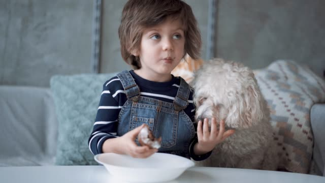 cute boy sharing his cookie with his pet - haustier stock-videos und b-roll-filmmaterial