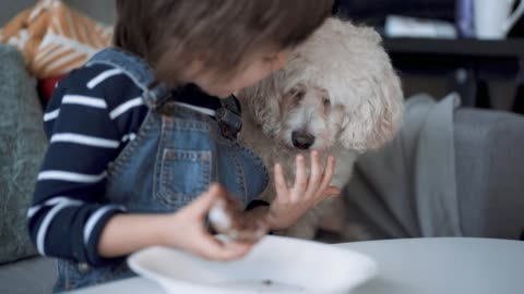 cute boy sharing his cookie with his pet - messy stock videos & royalty-free footage