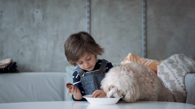 cute boy sharing his cookie with his pet - haustierbesitzer stock-videos und b-roll-filmmaterial